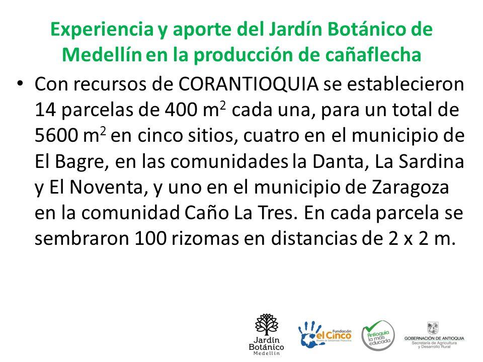 Experiencia y aporte del Jardín Botánico de Medellín en la producción de cañaflecha