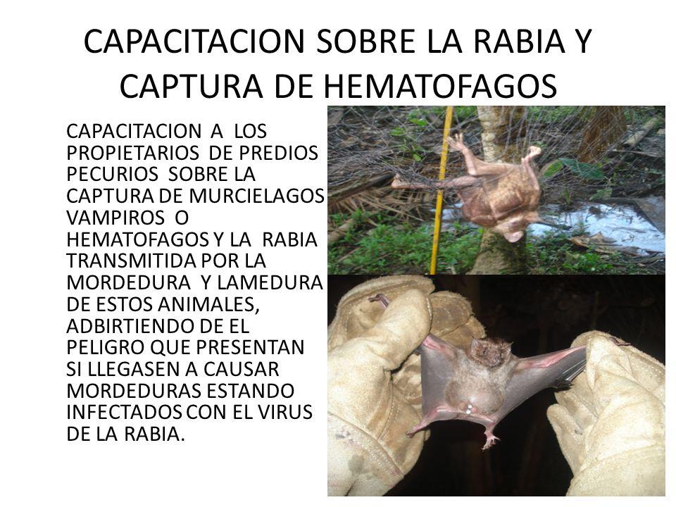 CAPACITACION SOBRE LA RABIA Y CAPTURA DE HEMATOFAGOS