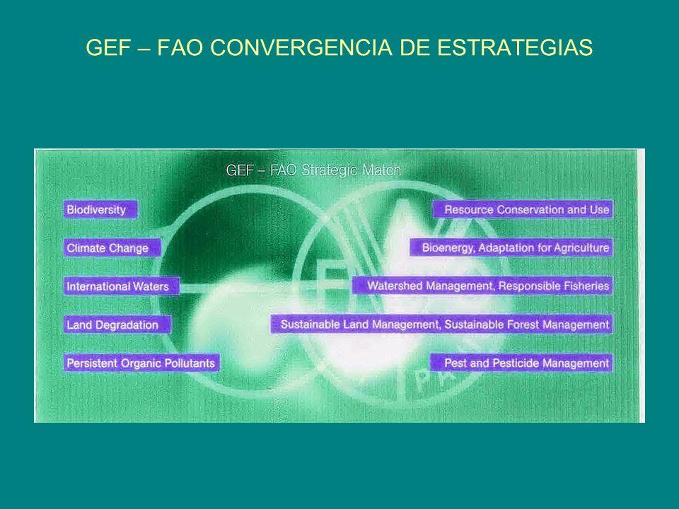 GEF – FAO CONVERGENCIA DE ESTRATEGIAS