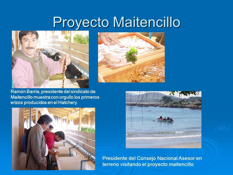 Proyecto MaitencilloRamón Barría, presidente del sindicato de Maitencillo muestra con orgullo los primeros erizos producidos en el Hatchery.