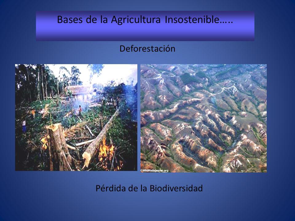 Bases de la Agricultura Insostenible…..
