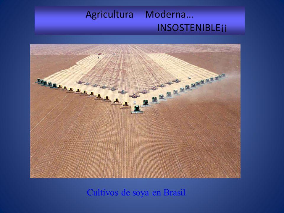 Cultivos de soya en Brasil