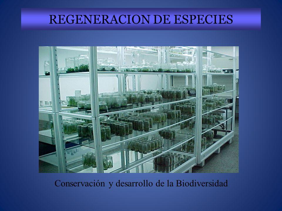 REGENERACION DE ESPECIES