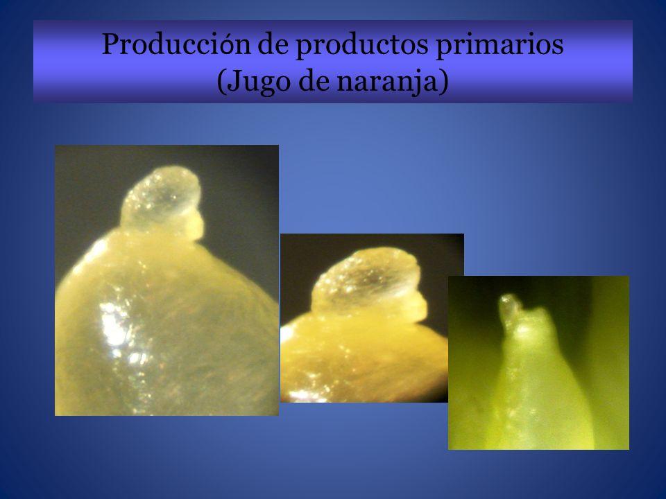 Producción de productos primarios (Jugo de naranja)
