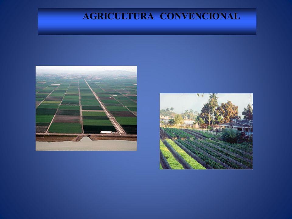 AGRICULTURA CONVENCIONAL