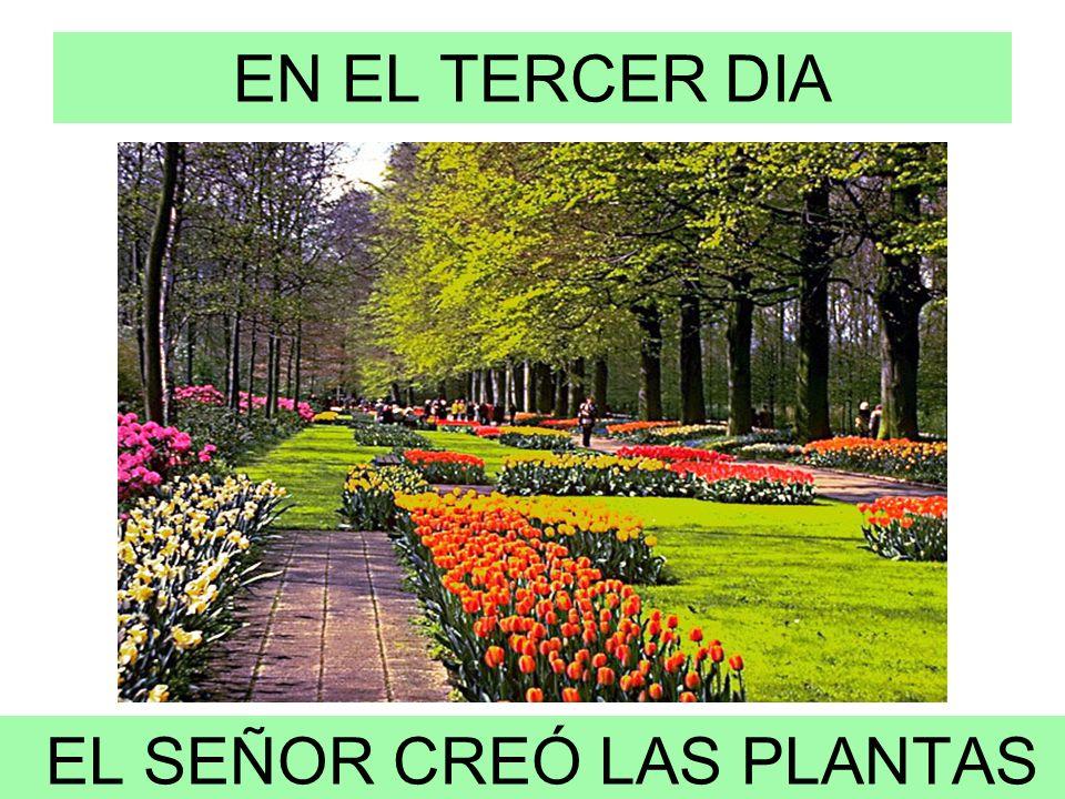 EL SEÑOR CREÓ LAS PLANTAS