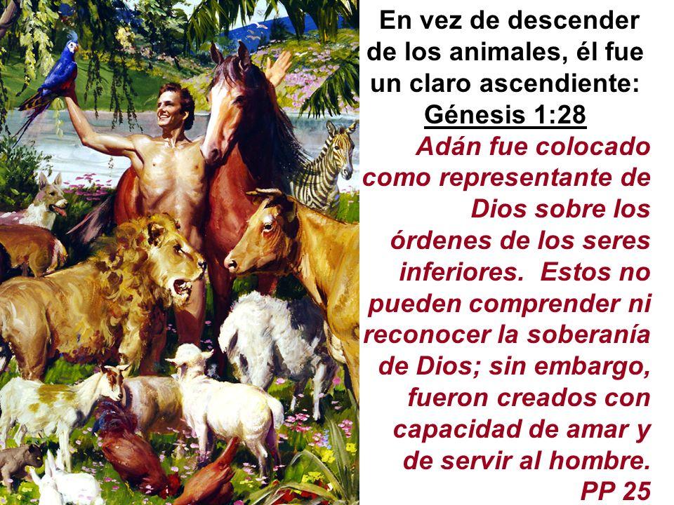 En vez de descender de los animales, él fue un claro ascendiente: Génesis 1:28