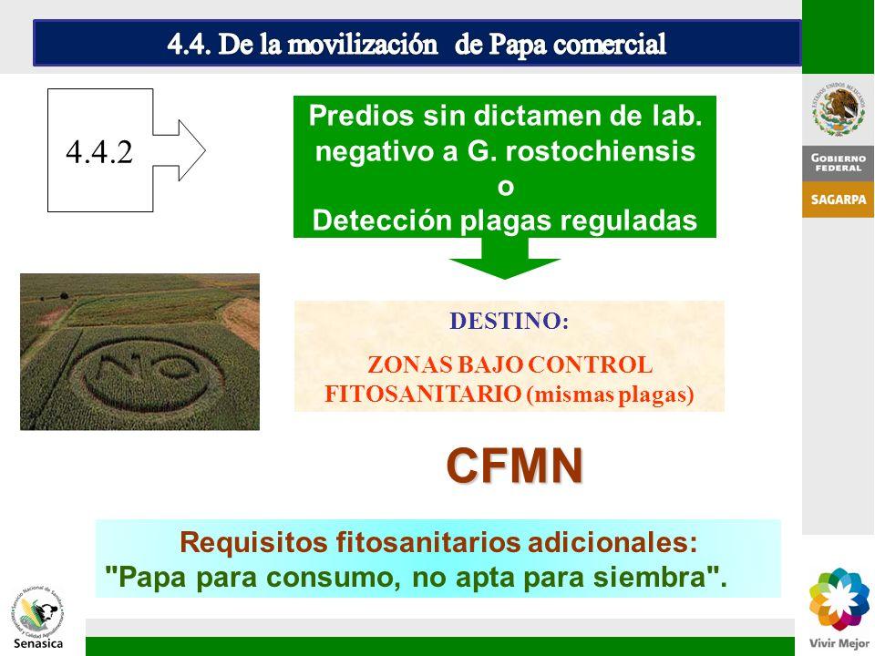 CFMN 4.4.2 4.4. De la movilización de Papa comercial
