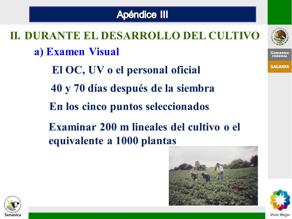 II. DURANTE EL DESARROLLO DEL CULTIVO a) Examen Visual