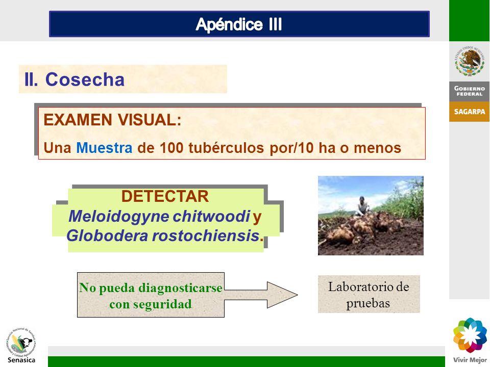 Meloidogyne chitwoodi y Globodera rostochiensis.