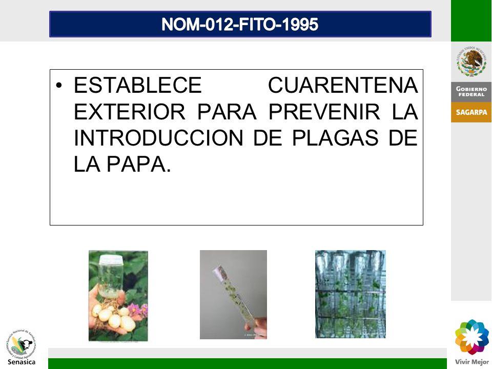 NOM-012-FITO-1995 ESTABLECE CUARENTENA EXTERIOR PARA PREVENIR LA INTRODUCCION DE PLAGAS DE LA PAPA.