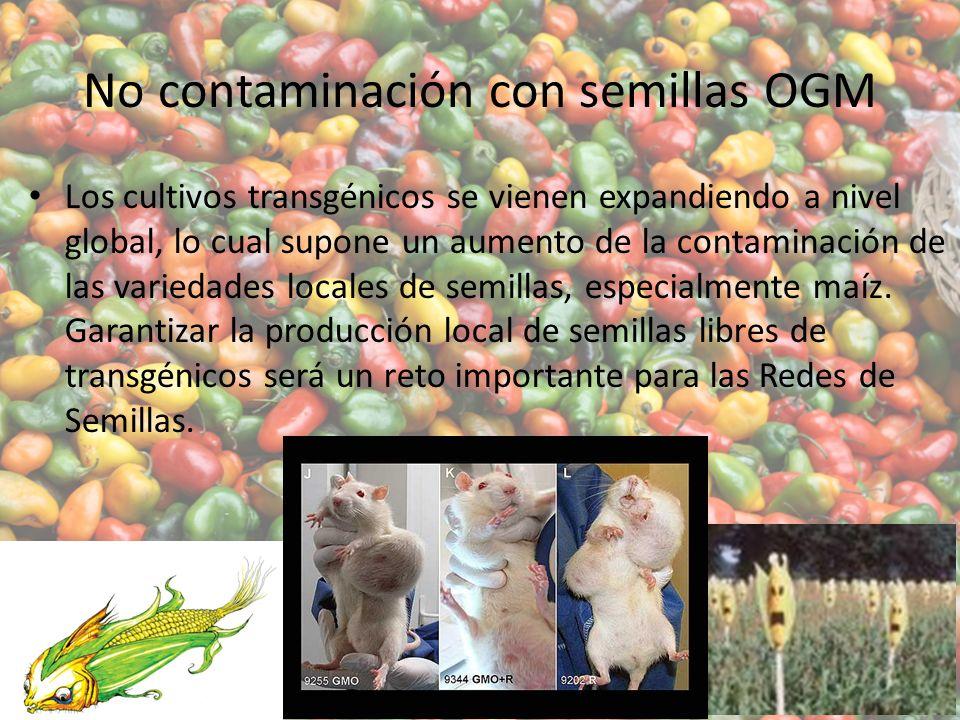 No contaminación con semillas OGM
