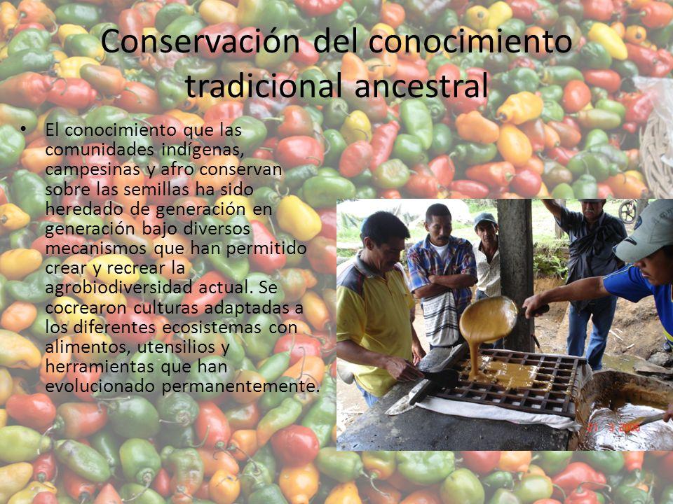 Conservación del conocimiento tradicional ancestral