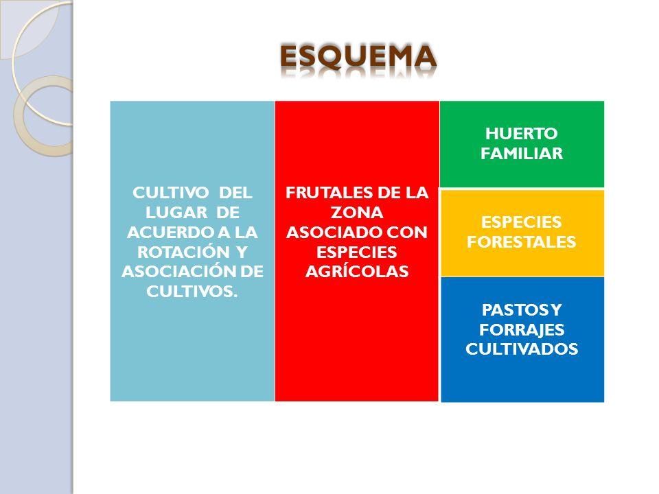 ESQUEMA CULTIVO DEL LUGAR DE ACUERDO A LA ROTACIÓN Y ASOCIACIÓN DE CULTIVOS. FRUTALES DE LA ZONA ASOCIADO CON ESPECIES AGRÍCOLAS.