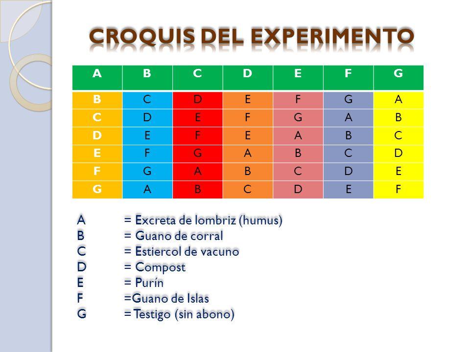CROQUIS DEL EXPERIMENTO
