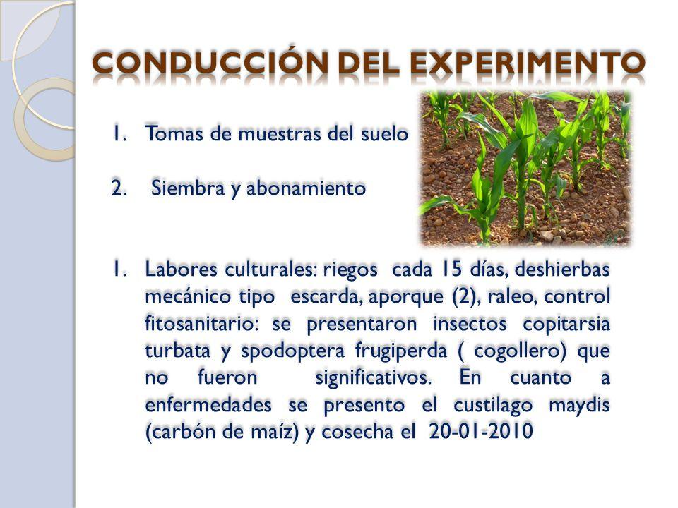 CONDUCCIÓN DEL EXPERIMENTO