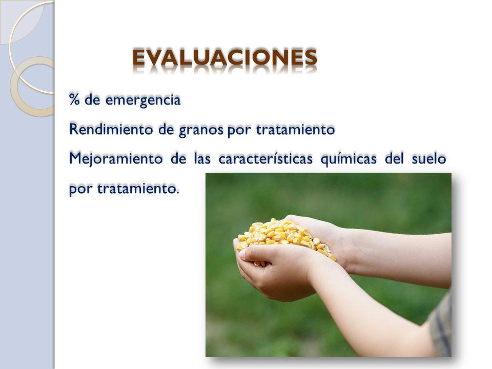 EVALUACIONES % de emergencia Rendimiento de granos por tratamiento