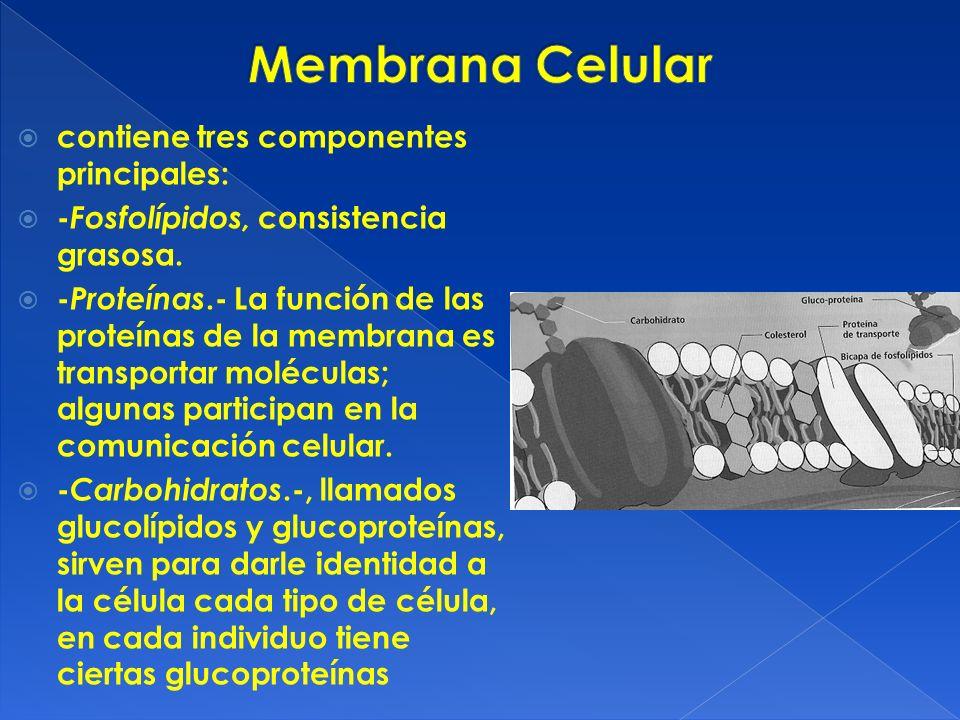 Membrana Celular contiene tres componentes principales: