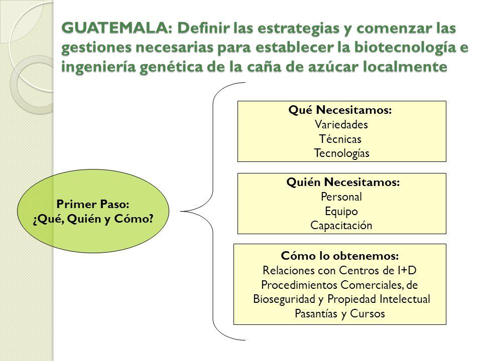 GUATEMALA: Definir las estrategias y comenzar las gestiones necesarias para establecer la biotecnología e ingeniería genética de la caña de azúcar localmente