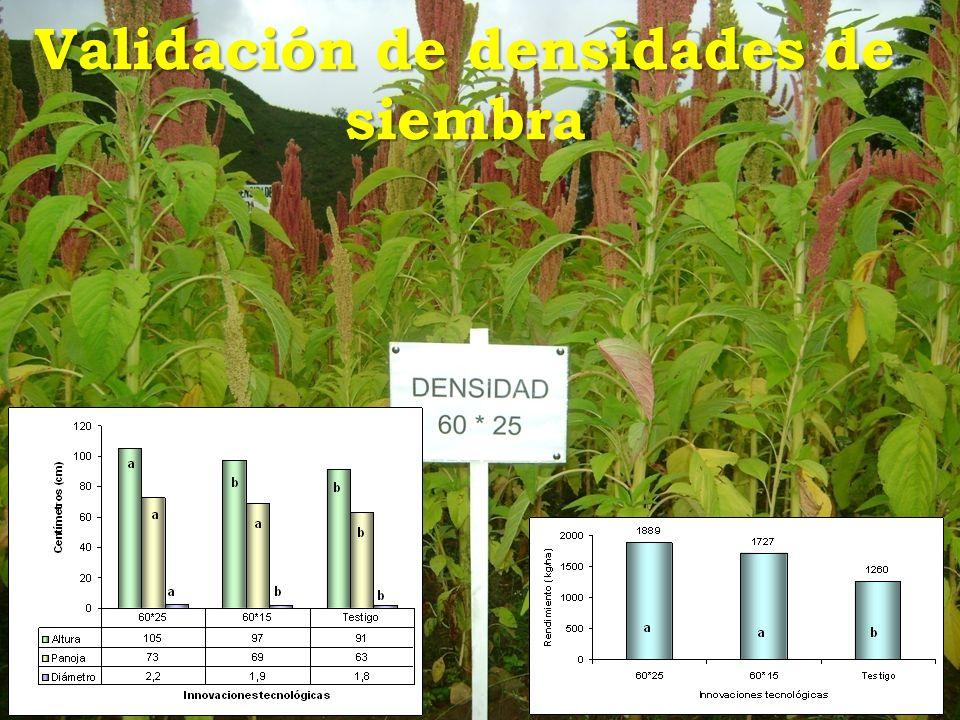 Validación de densidades de siembra