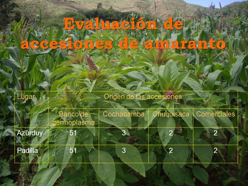 Evaluación de accesiones de amaranto