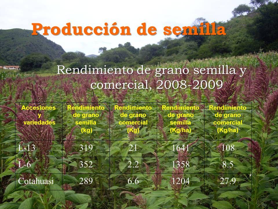 Producción de semilla Rendimiento de grano semilla y comercial, 2008-2009. Accesiones. y. variedades.
