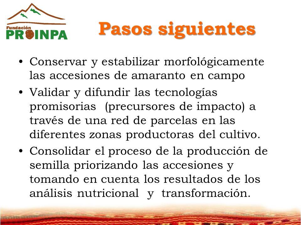 Pasos siguientes Conservar y estabilizar morfológicamente las accesiones de amaranto en campo.