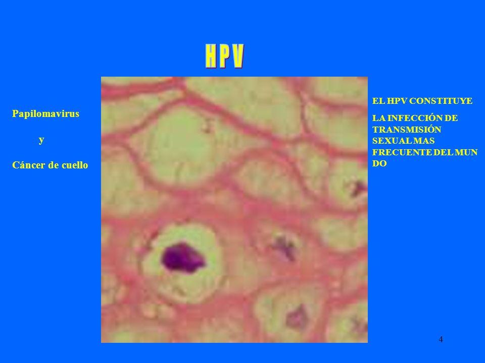 H P V Papilomavirus y Cáncer de cuello EL HPV CONSTITUYE
