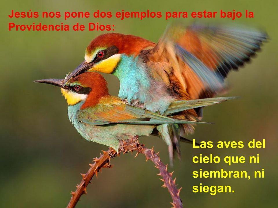 Las aves del cielo que ni siembran, ni siegan.