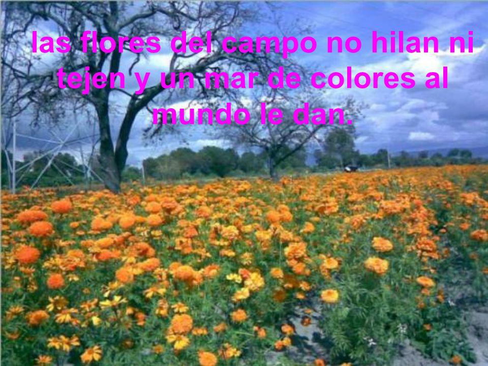 las flores del campo no hilan ni tejen y un mar de colores al mundo le dan.