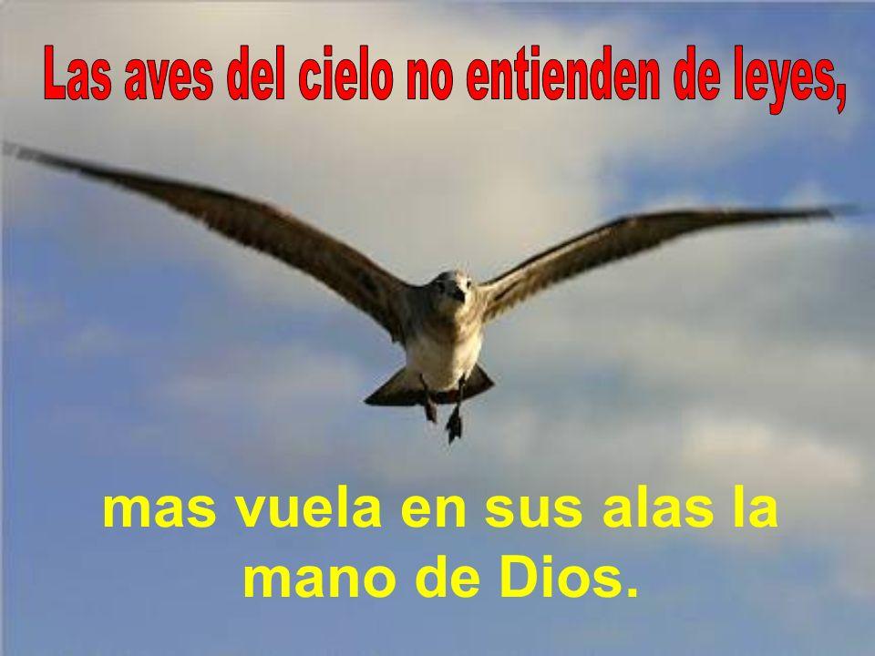mas vuela en sus alas la mano de Dios.