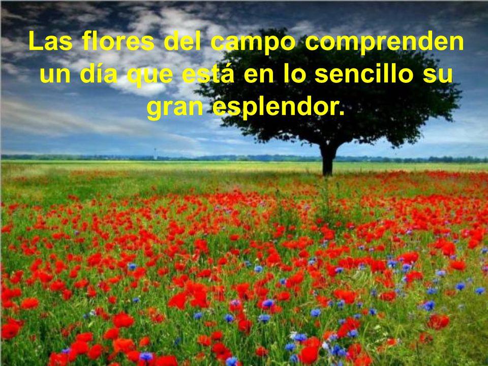 Las flores del campo comprenden un día que está en lo sencillo su gran esplendor.