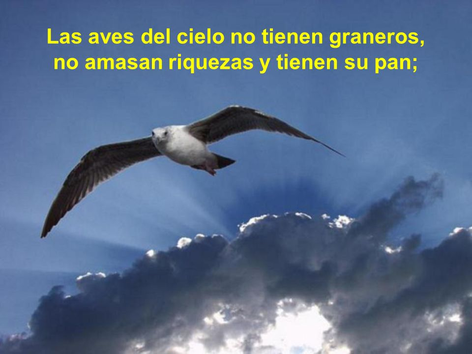 Las aves del cielo no tienen graneros, no amasan riquezas y tienen su pan;