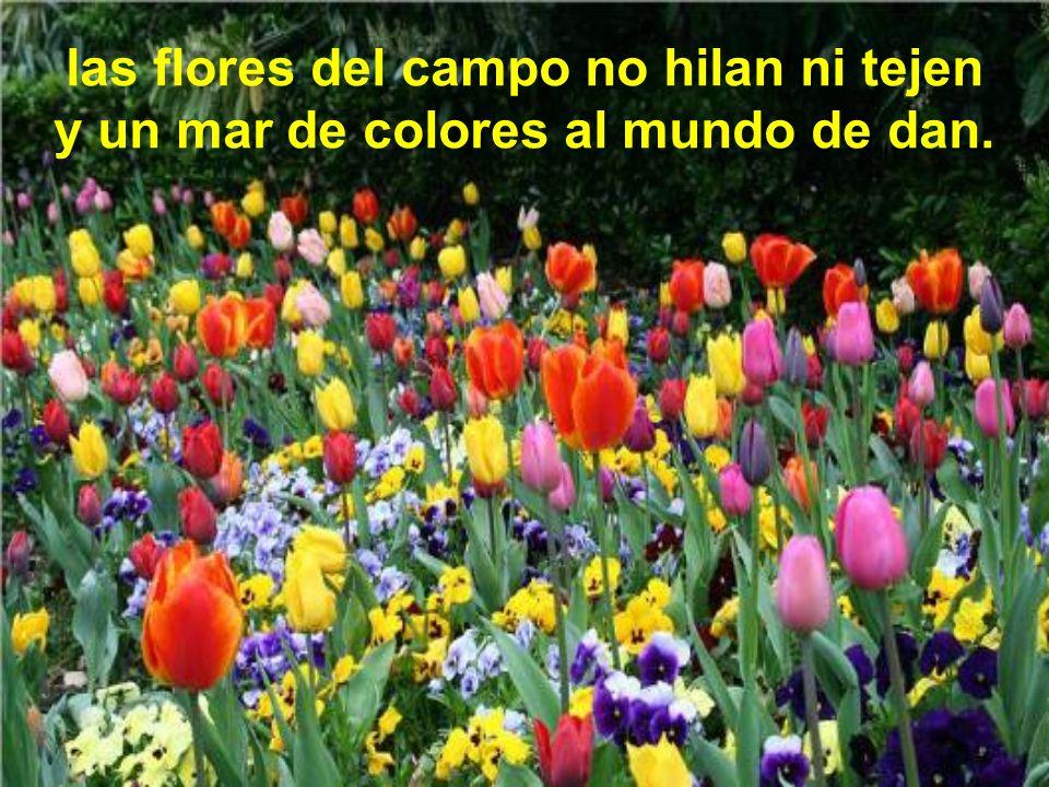 las flores del campo no hilan ni tejen y un mar de colores al mundo de dan.