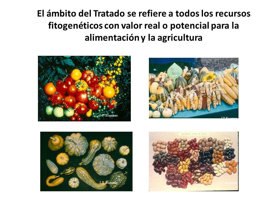 El ámbito del Tratado se refiere a todos los recursos fitogenéticos con valor real o potencial para la alimentación y la agricultura
