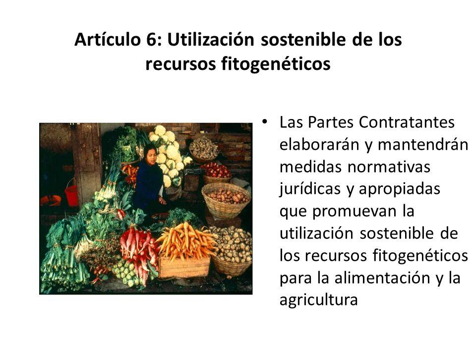 Artículo 6: Utilización sostenible de los recursos fitogenéticos