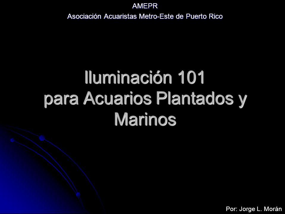 Iluminación 101 para Acuarios Plantados y Marinos