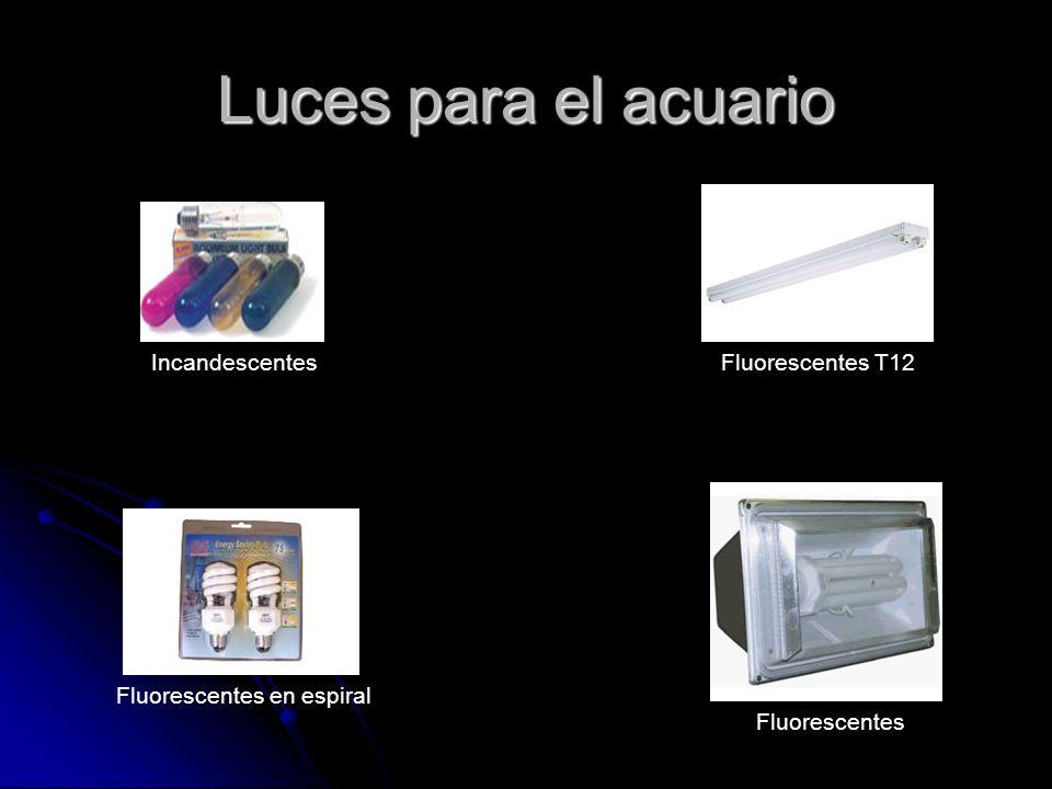 Luces para el acuario Incandescentes Fluorescentes T12