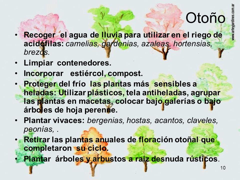 Otoño Recoger el agua de lluvia para utilizar en el riego de acidófilas: camelias, gardenias, azaleas, hortensias, brezos.