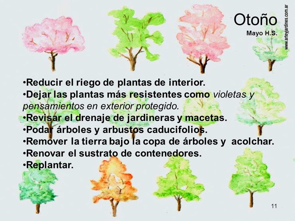 Otoño Mayo H.S. Reducir el riego de plantas de interior.