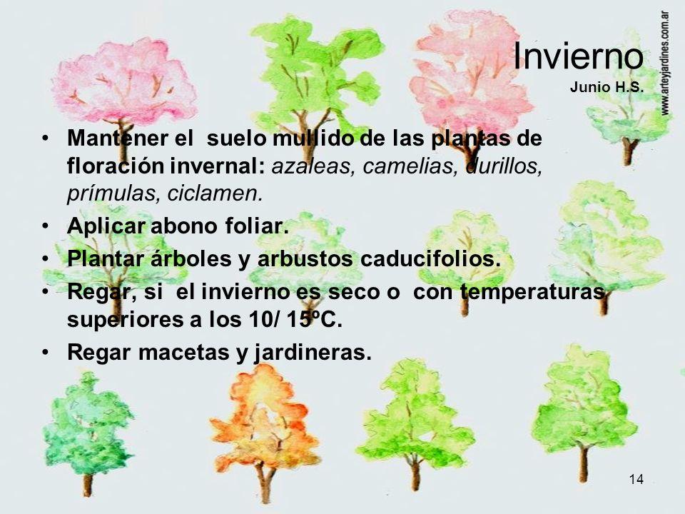 Invierno Junio H.S. Mantener el suelo mullido de las plantas de floración invernal: azaleas, camelias, durillos, prímulas, ciclamen.