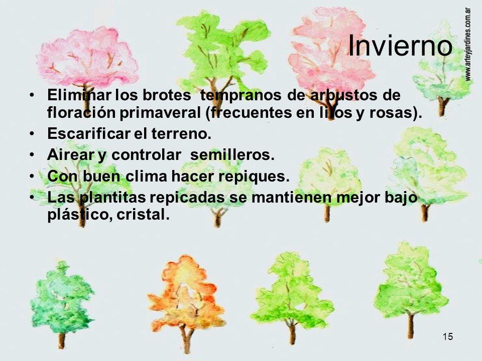 Invierno Eliminar los brotes tempranos de arbustos de floración primaveral (frecuentes en lilos y rosas).