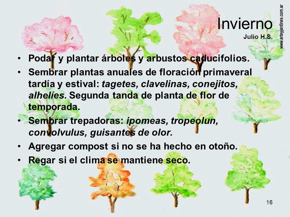Invierno Julio H.S. Podar y plantar árboles y arbustos caducifolios.