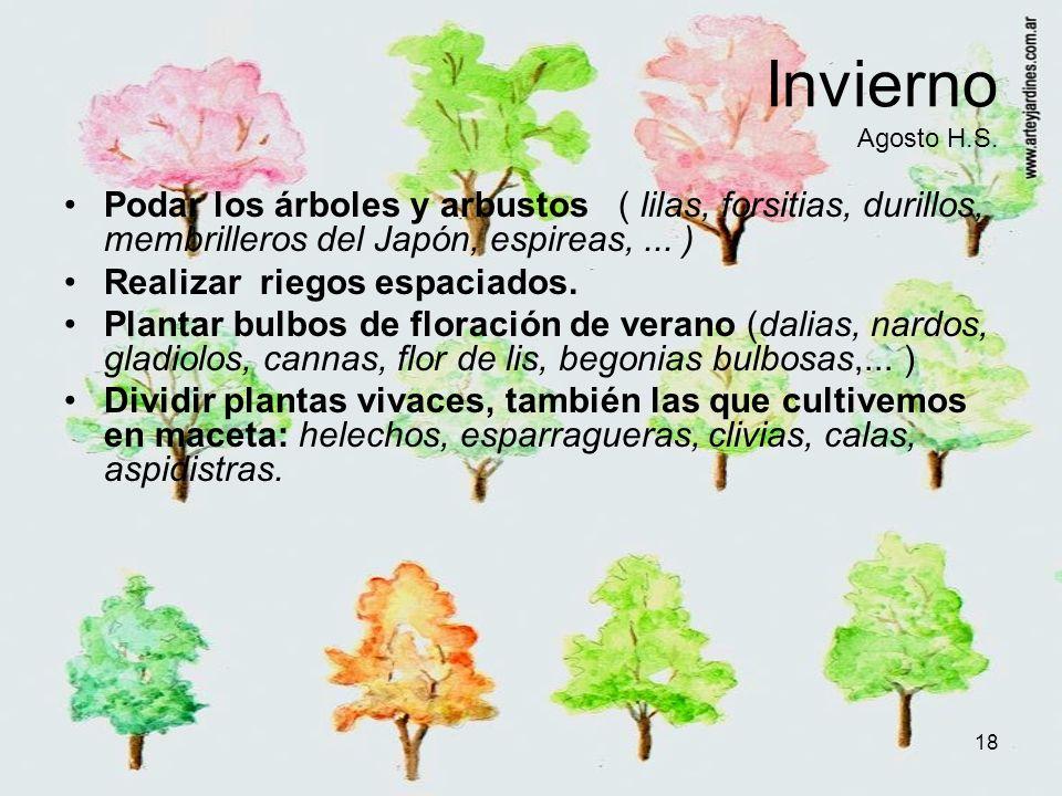 Invierno Agosto H.S. Podar los árboles y arbustos ( lilas, forsitias, durillos, membrilleros del Japón, espireas, ... )