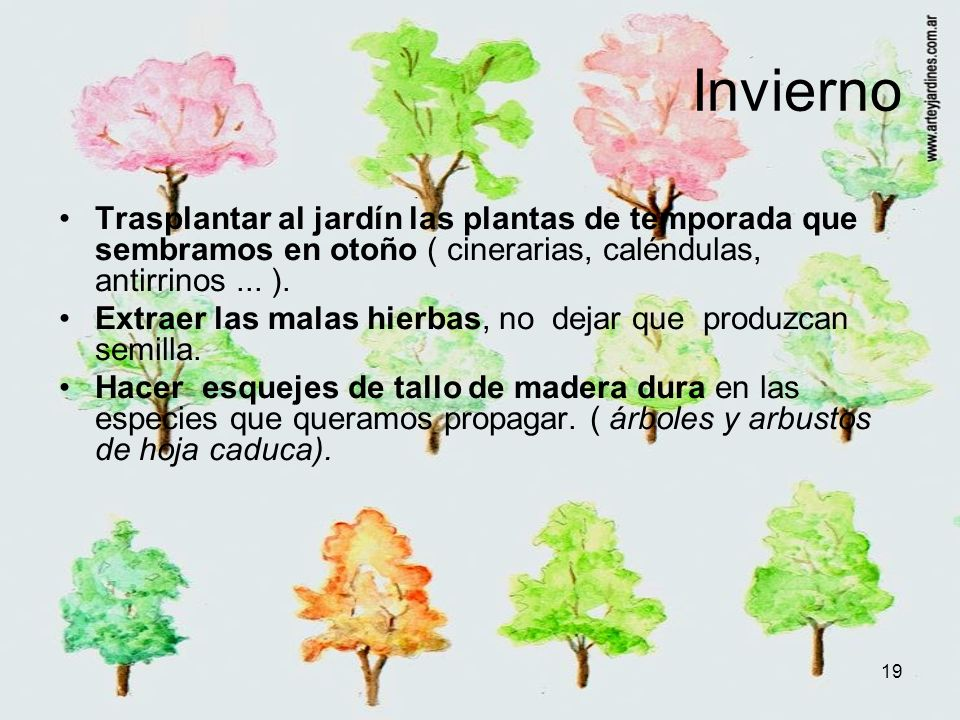 Invierno Trasplantar al jardín las plantas de temporada que sembramos en otoño ( cinerarias, caléndulas, antirrinos ... ).