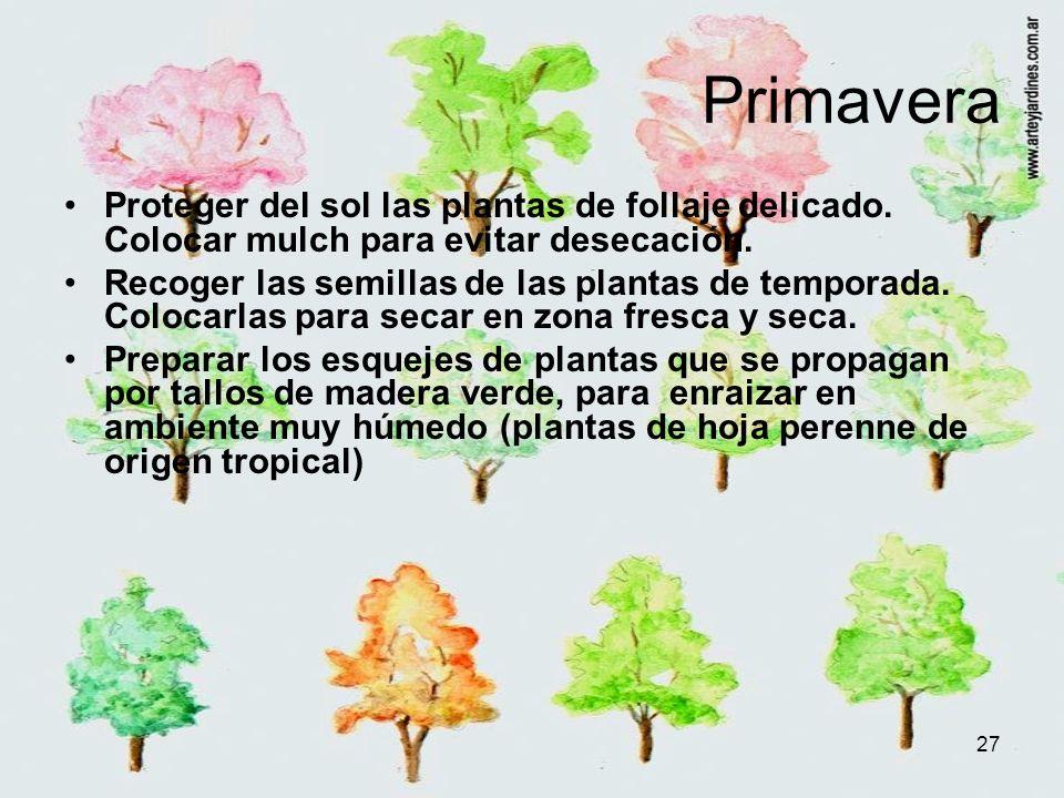 Primavera Proteger del sol las plantas de follaje delicado. Colocar mulch para evitar desecación.