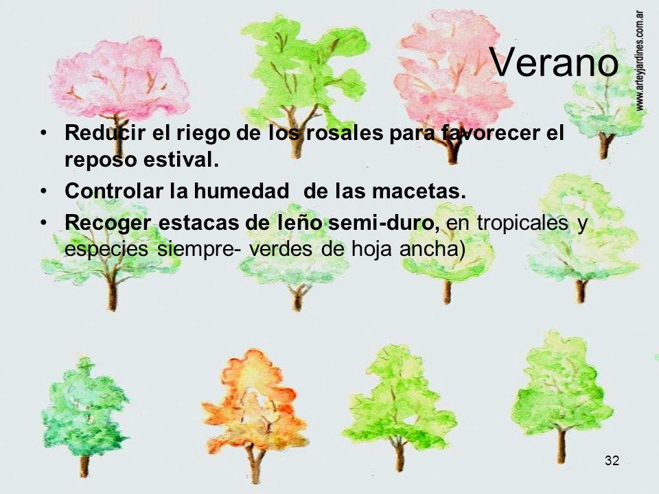 Verano Reducir el riego de los rosales para favorecer el reposo estival. Controlar la humedad de las macetas.