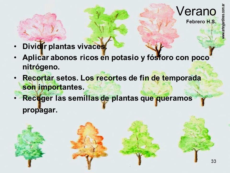 Verano Febrero H.S. Dividir plantas vivaces.