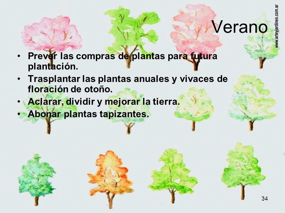 Verano Prever las compras de plantas para futura plantación.