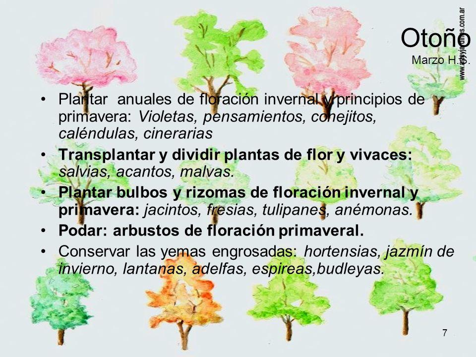 Otoño Marzo H.S. Plantar anuales de floración invernal y principios de primavera: Violetas, pensamientos, conejitos, caléndulas, cinerarias.